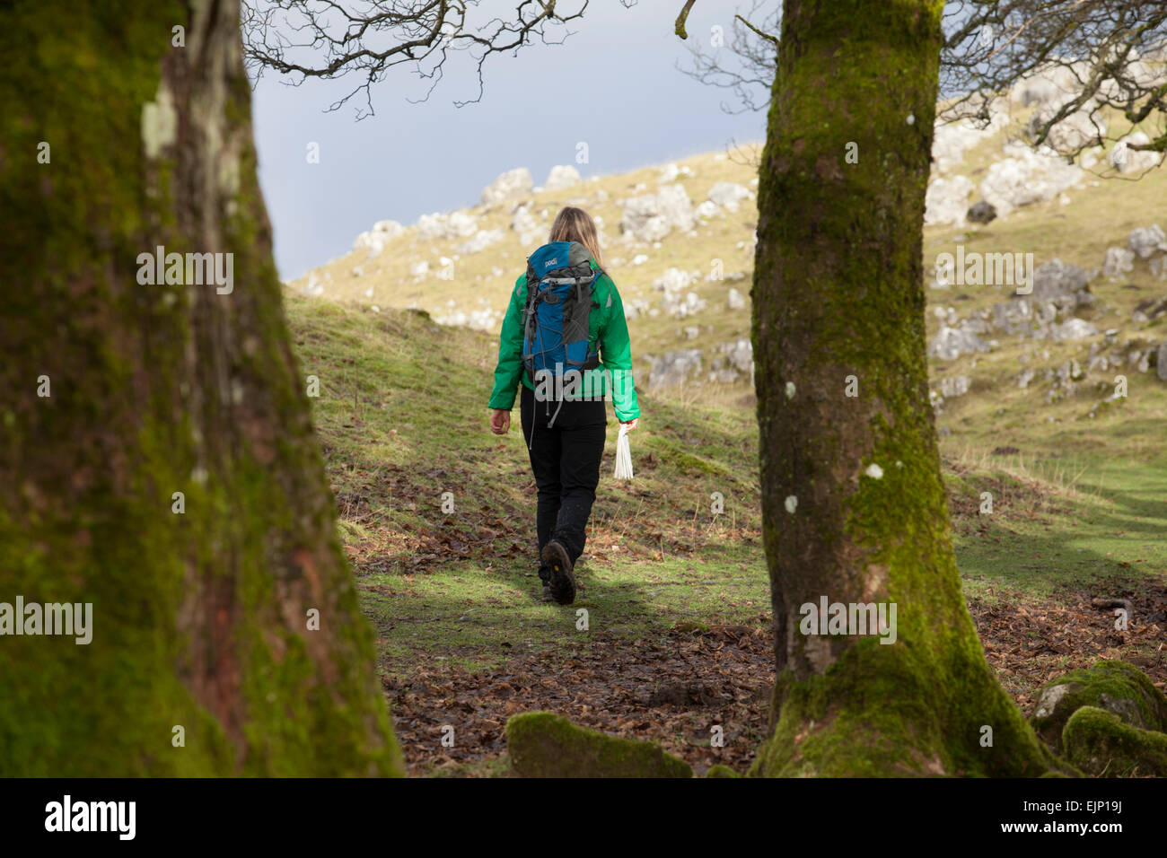 Walker on the Pennine Way in the Yorkshire Dales , UK - Stock Image