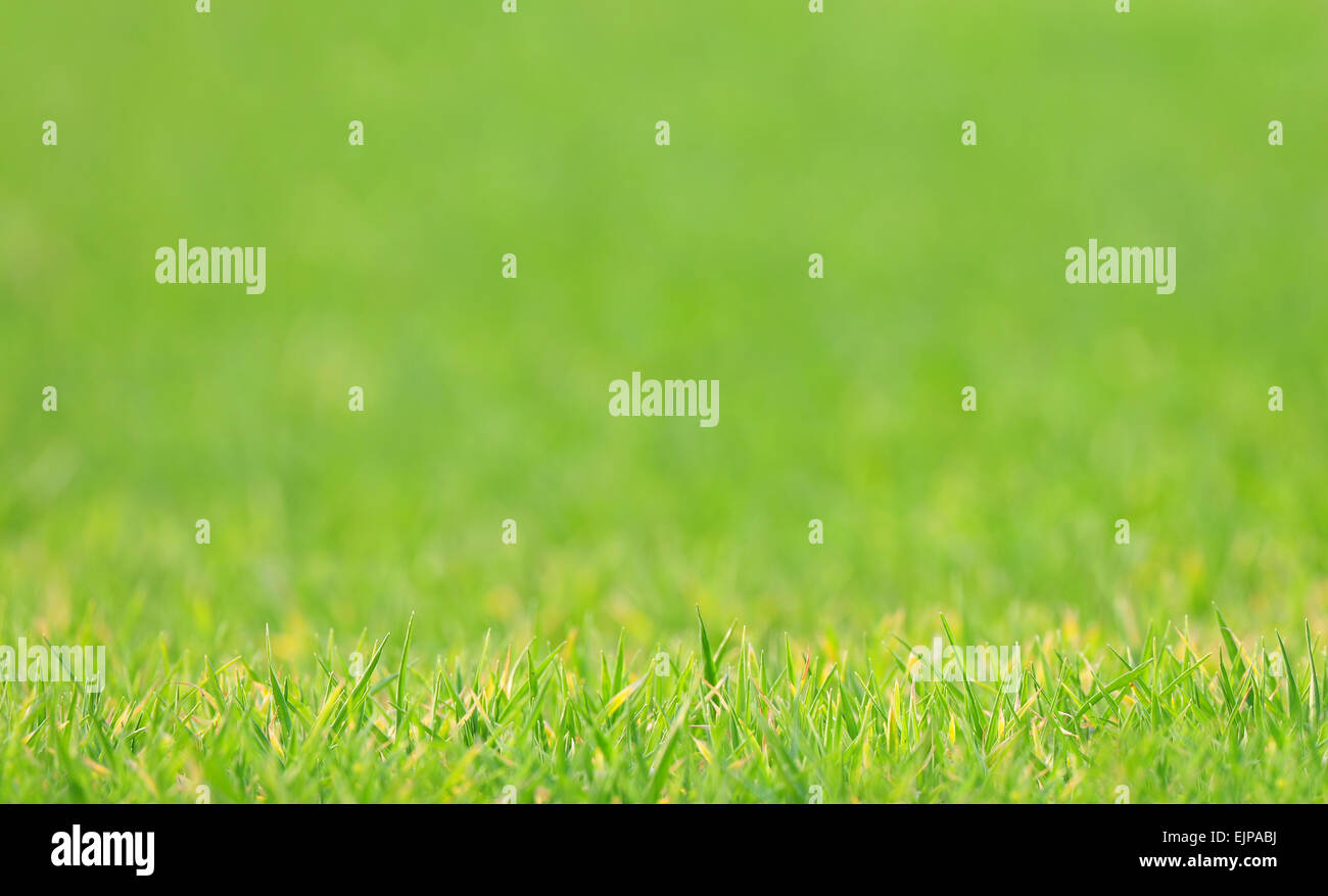 Lawn with blurred background, shallow depth of field - Stock Image