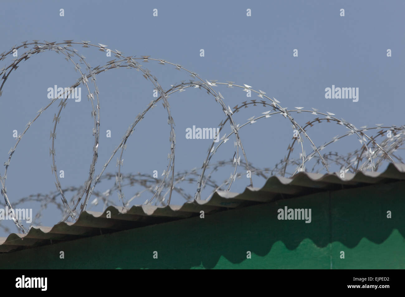 Razor Wire. Security fencing over corrugated tin sheet roofing Stock ...