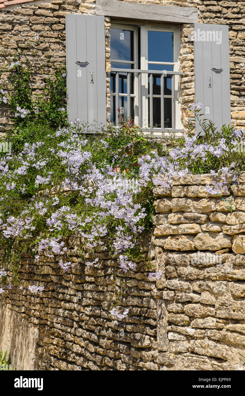 The lilac flower Solanum grows over a wall in  the garden of a house in Ares en Re, Ile de Re, France. - Stock Image
