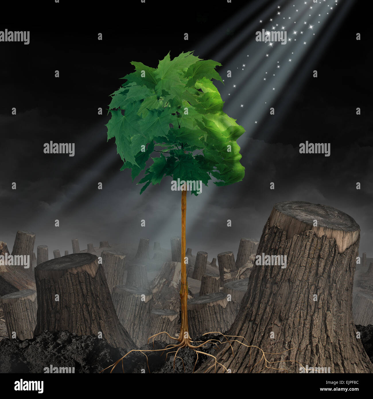 Renewal and hope Life and recovery concept as a green leaf tree shaped as a human head growing out of landscape - Stock Image