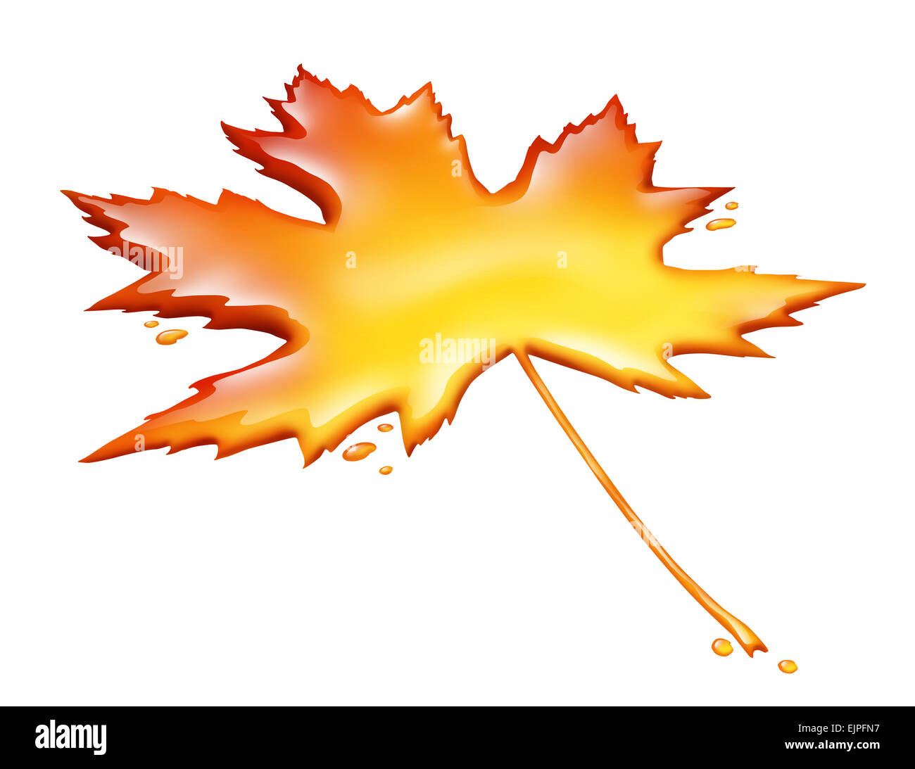 Maple syrup leaf isolated on a white background as a sweet golden brown delicious liquid representing a natural - Stock Image