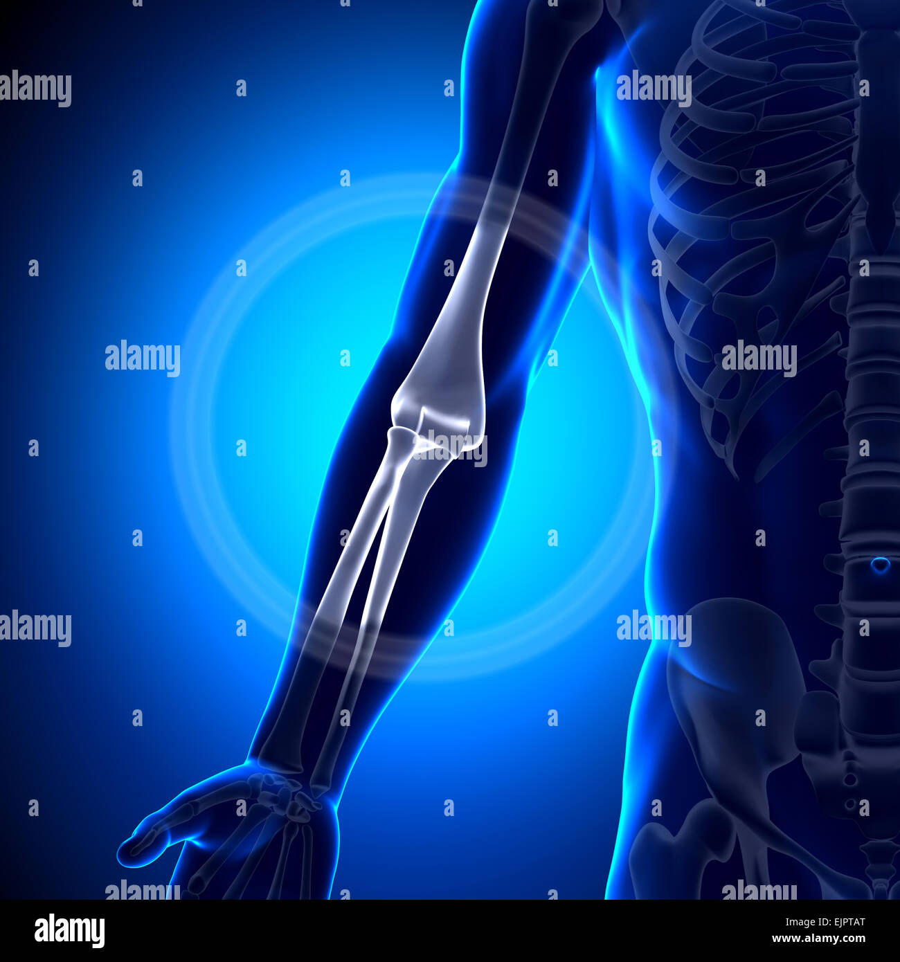 Male Elbow Anatomy Bones Stock Photo 80407344 Alamy