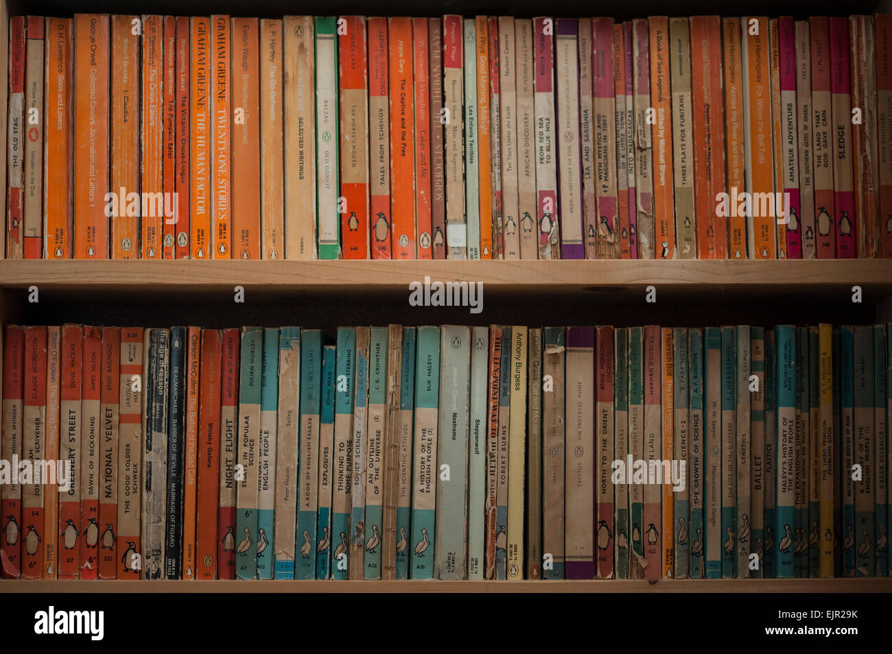 Bookcase Shelves Full Of A Collection Vintage Penguin And Pelican Books
