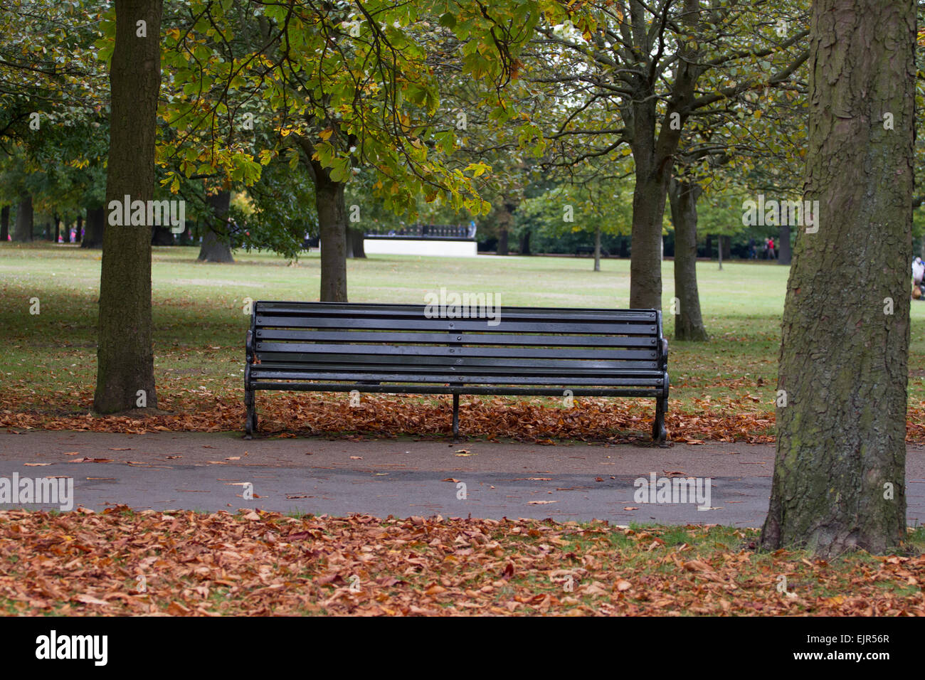 An empty bench and autumn leaves on the ground. - Stock Image