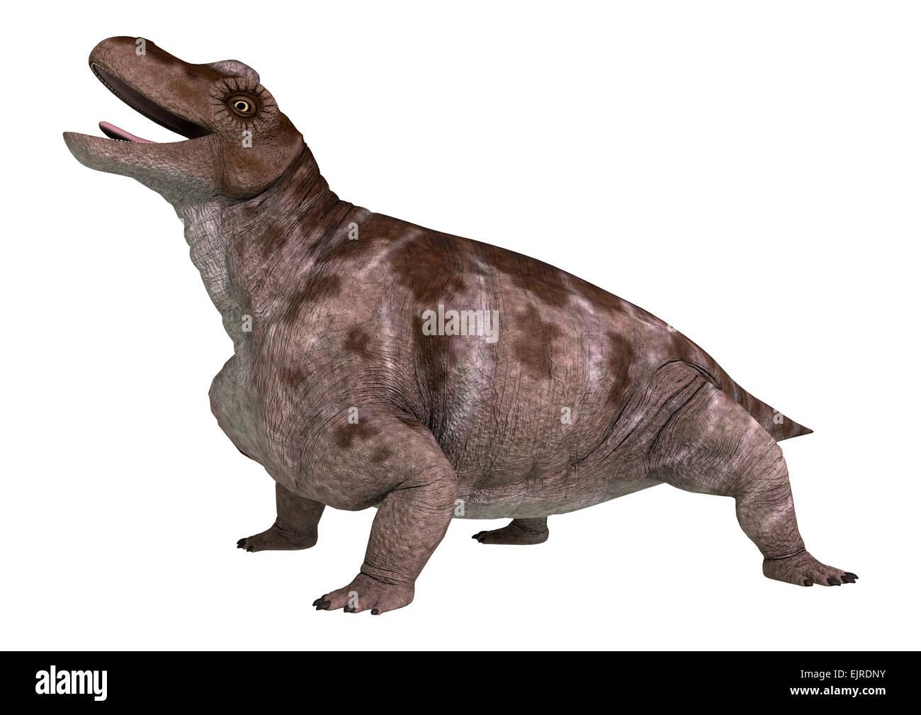 3D digital render of a dinosaur keratocephalus isolated on white background - Stock Image