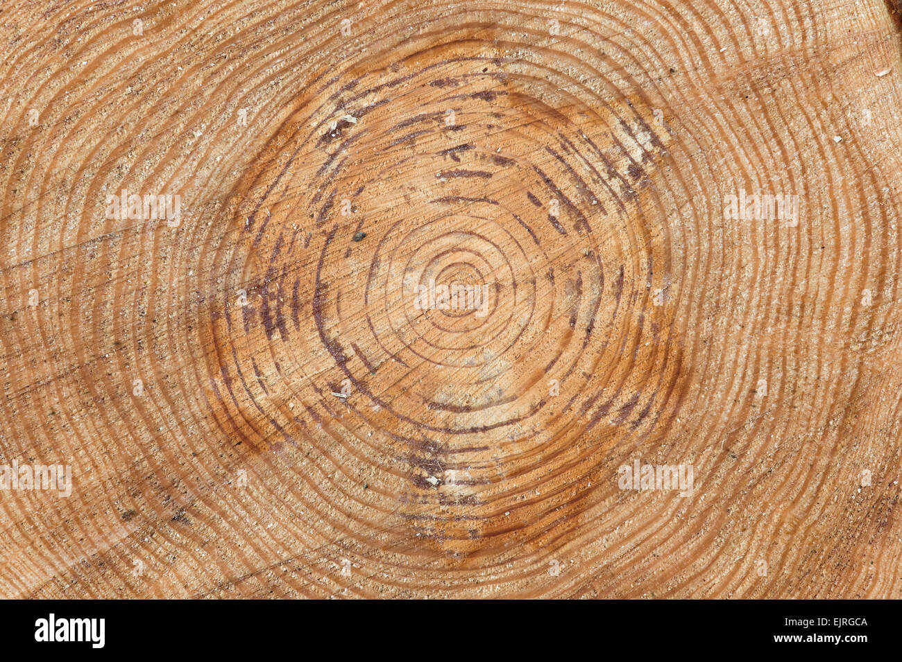 stock with growth of cross rings section vector logo set illustration tree trunk image the a shutterstock