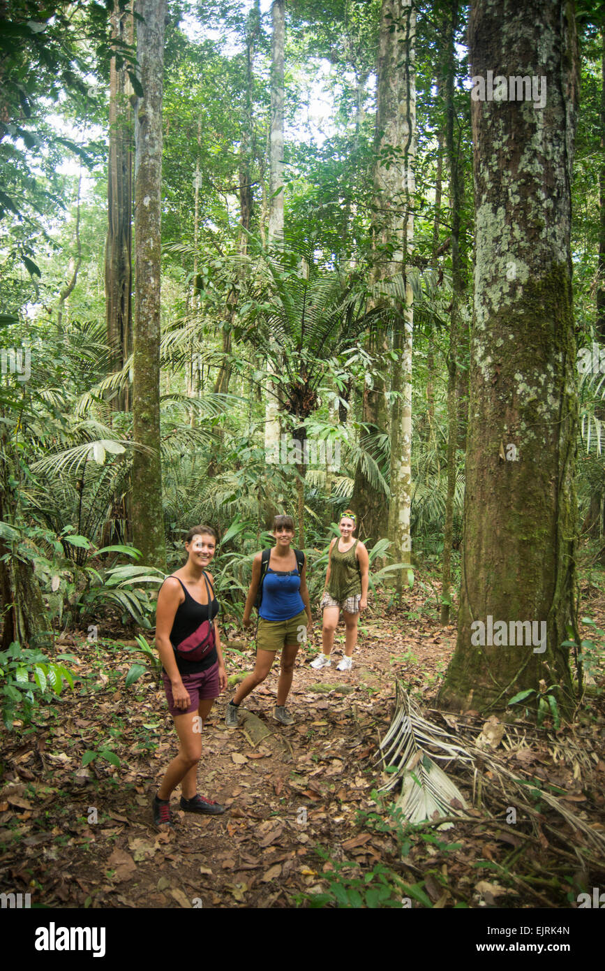 Tourists in the forest, Central Suriname Nature Reserve, Suriname - Stock Image