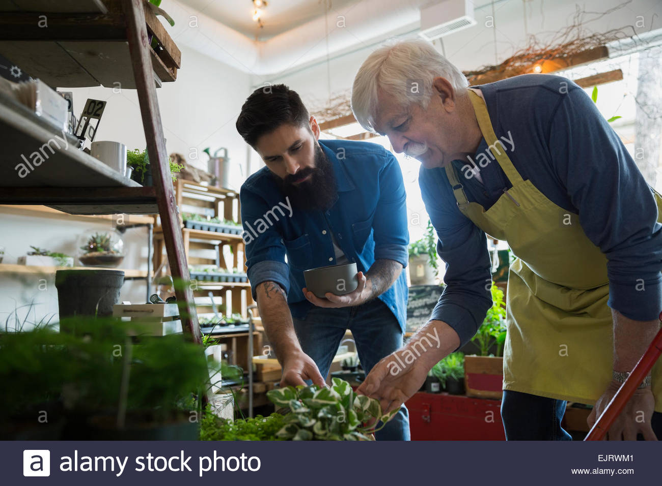 Terrarium shop owner helping customer with plants - Stock Image