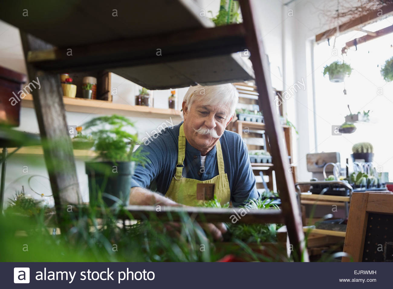 Terrarium shop owner looking at plants - Stock Image