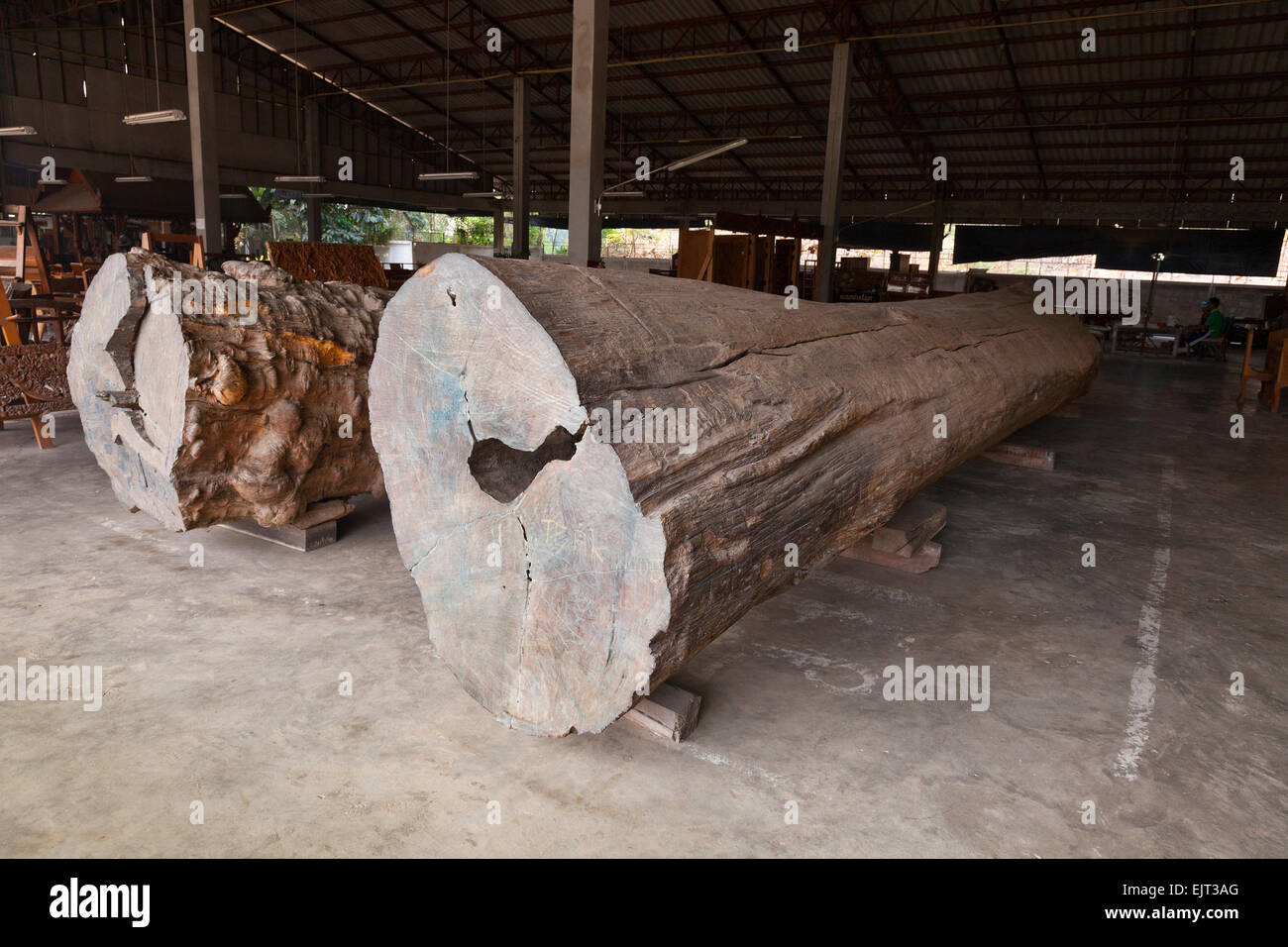 Rosewood (left) and teak (right) logs waiting to be cut and processed at a fine furniture workshop, Chiang Mai, - Stock Image