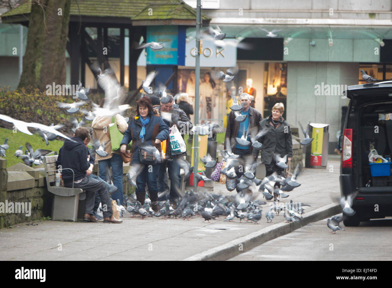 Nuisance birds: Shoppers surrounded by flocks of pigeons and seagulls in the street, Swansea Wales UK - Stock Image