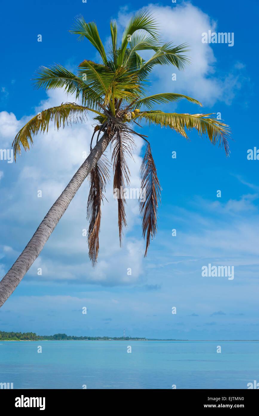 Palm Beach of Maradhoo, Gan, Addu Atoll, Seenu Atoll, Laccadive Sea, Maldives, Indian Ocean - Stock Image