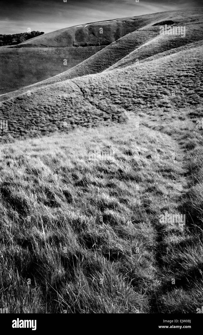 Uffington white horse from below - Stock Image