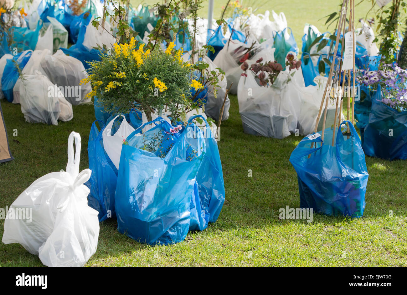 Bought flowers in plastic bags at a plant fair. UK - Stock Image