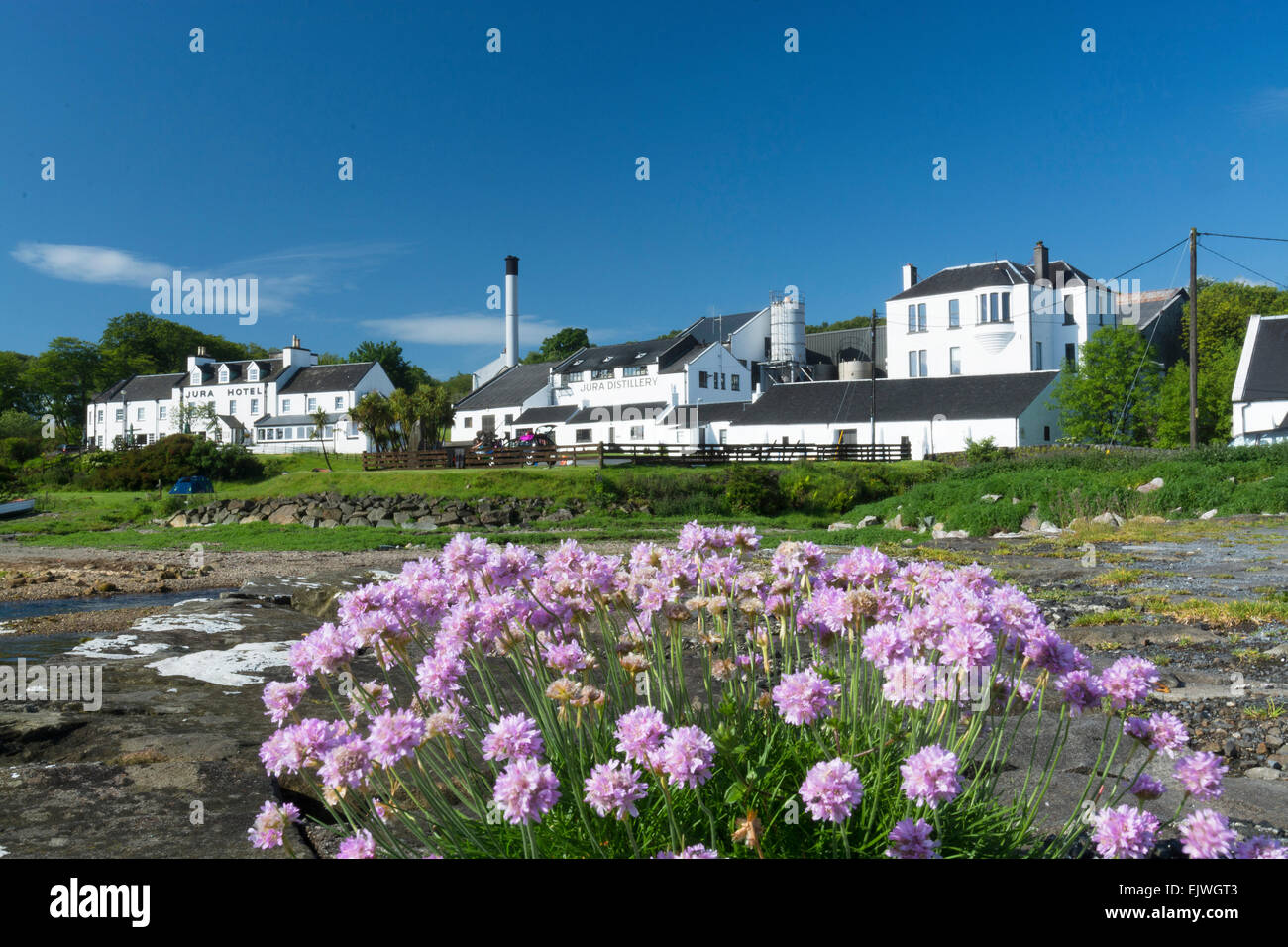 craighouse pier view of distillery thrift wild flowers - Stock Image
