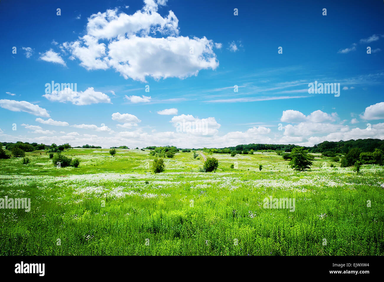 Green field with white flowers under a cloudy sky - Stock Image
