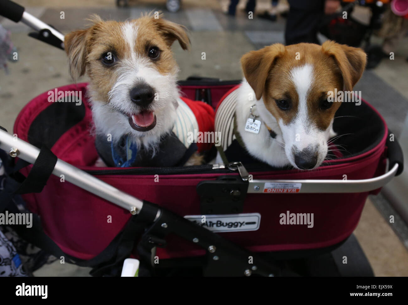 Tokyo, Japan  2nd Apr, 2015  Dogs sit in a trolley during
