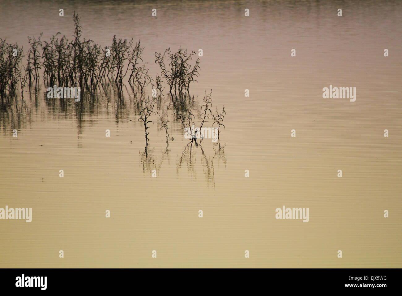 Plants reflect on a placid rural pond near Breeza, NSW, Australia. - Stock Image