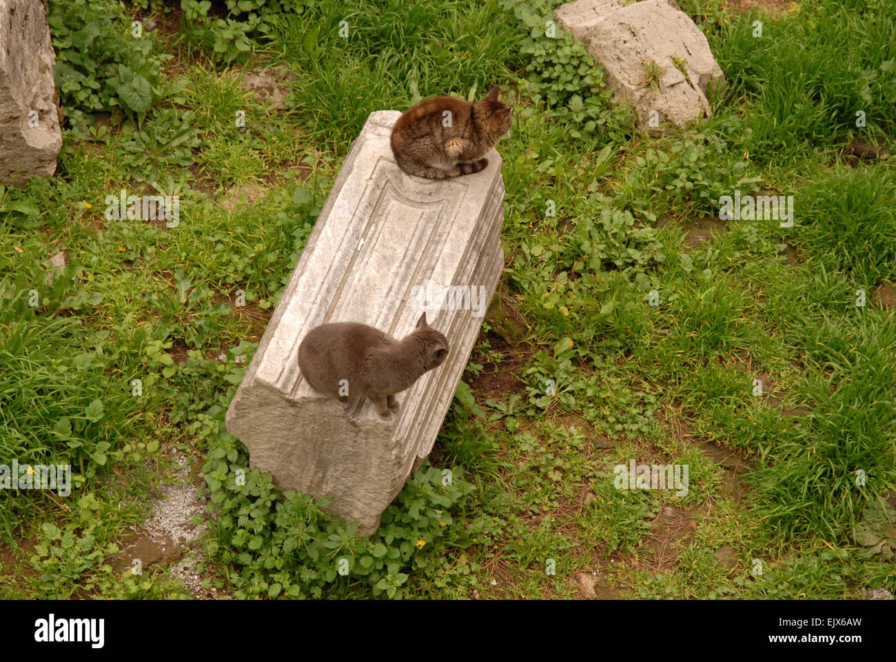 Area Sacra, Rome, with two feral cats sitting on a section of fallen column. - Stock Image