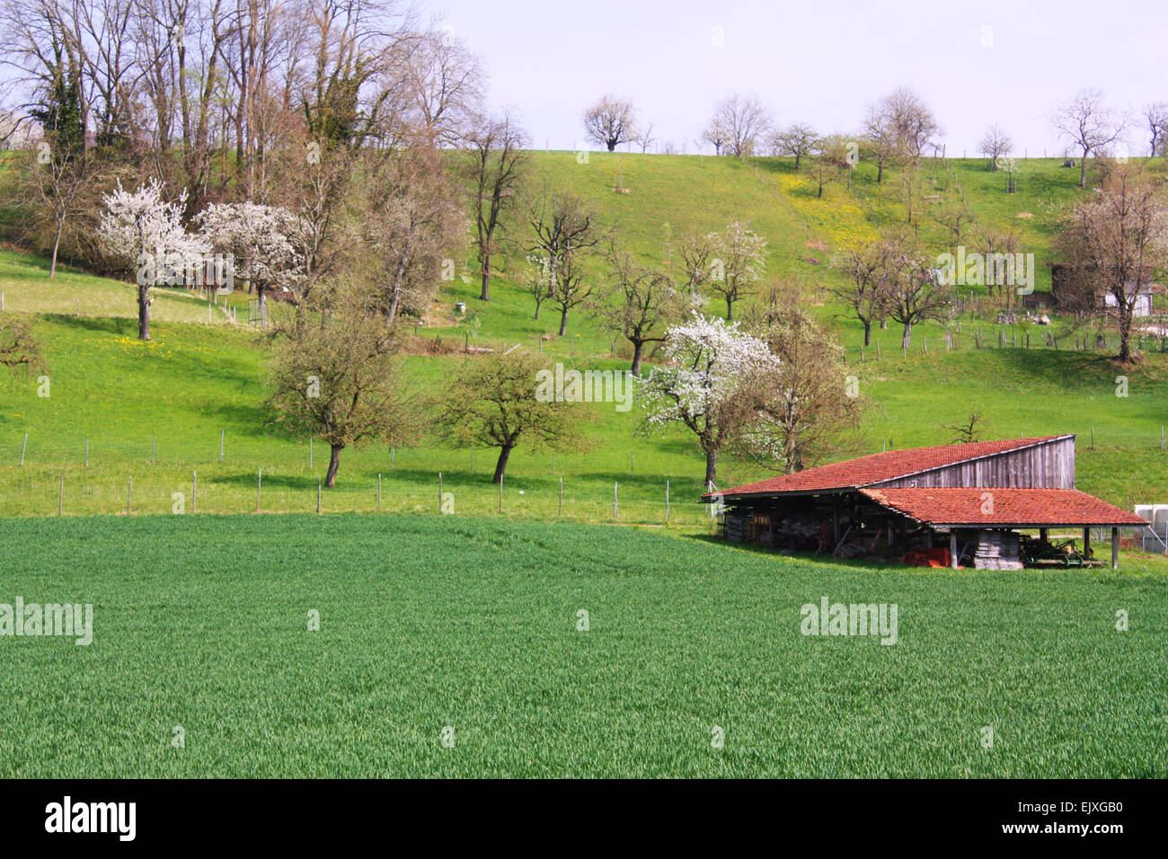 Barn on hill in Switzerland Stock Photo