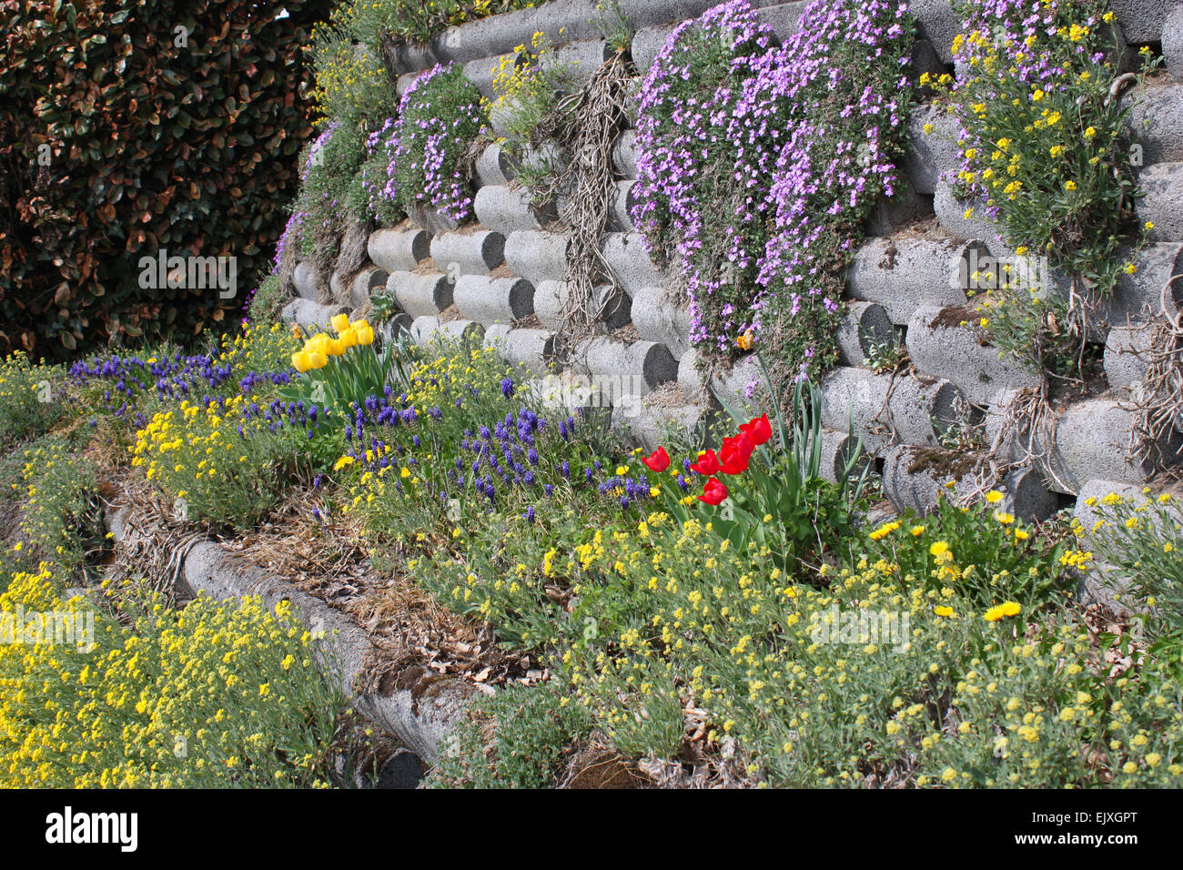 Flowering plants on the wall Stock Photo