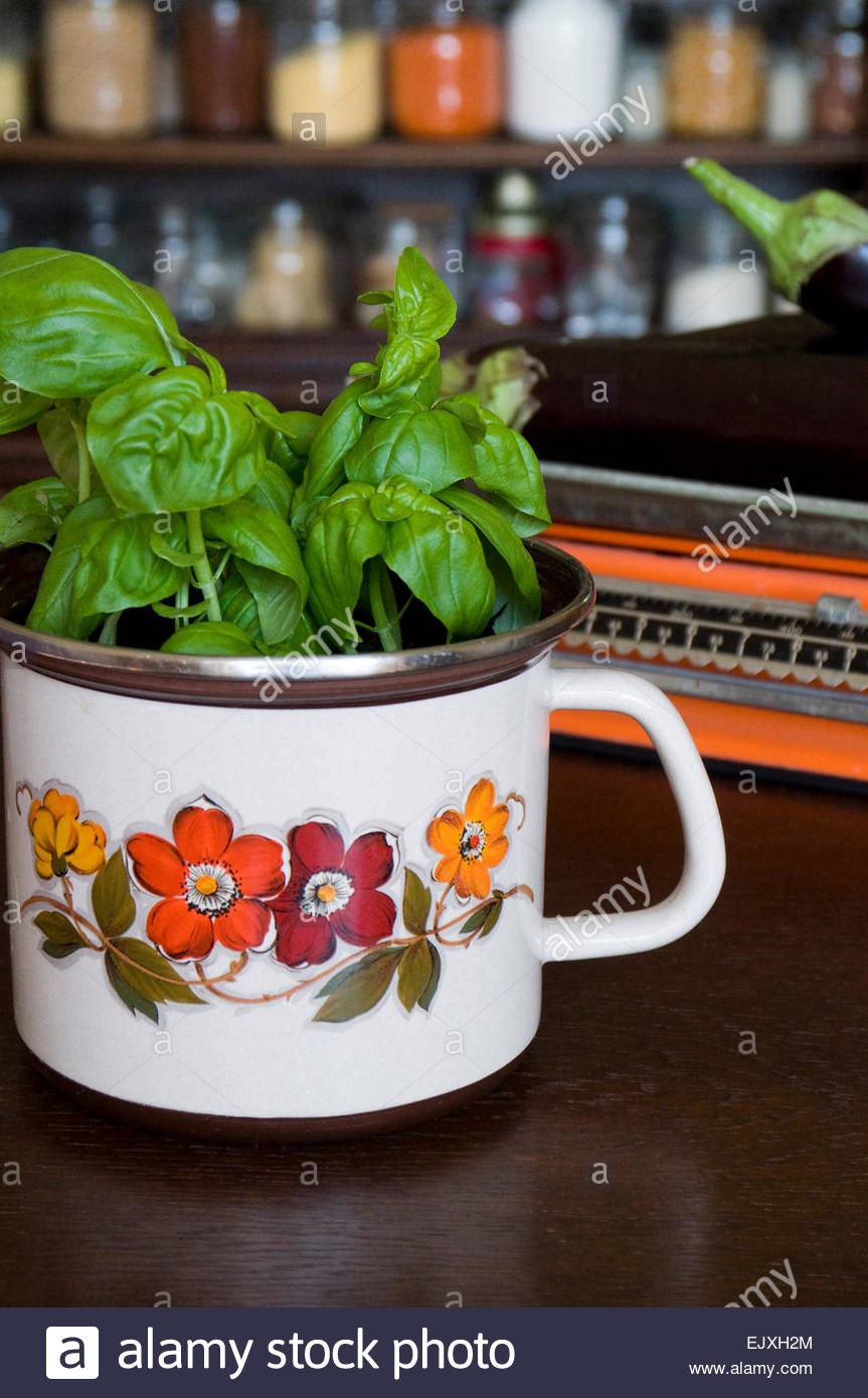 Basil plant in an old Seventies pot - Stock Image