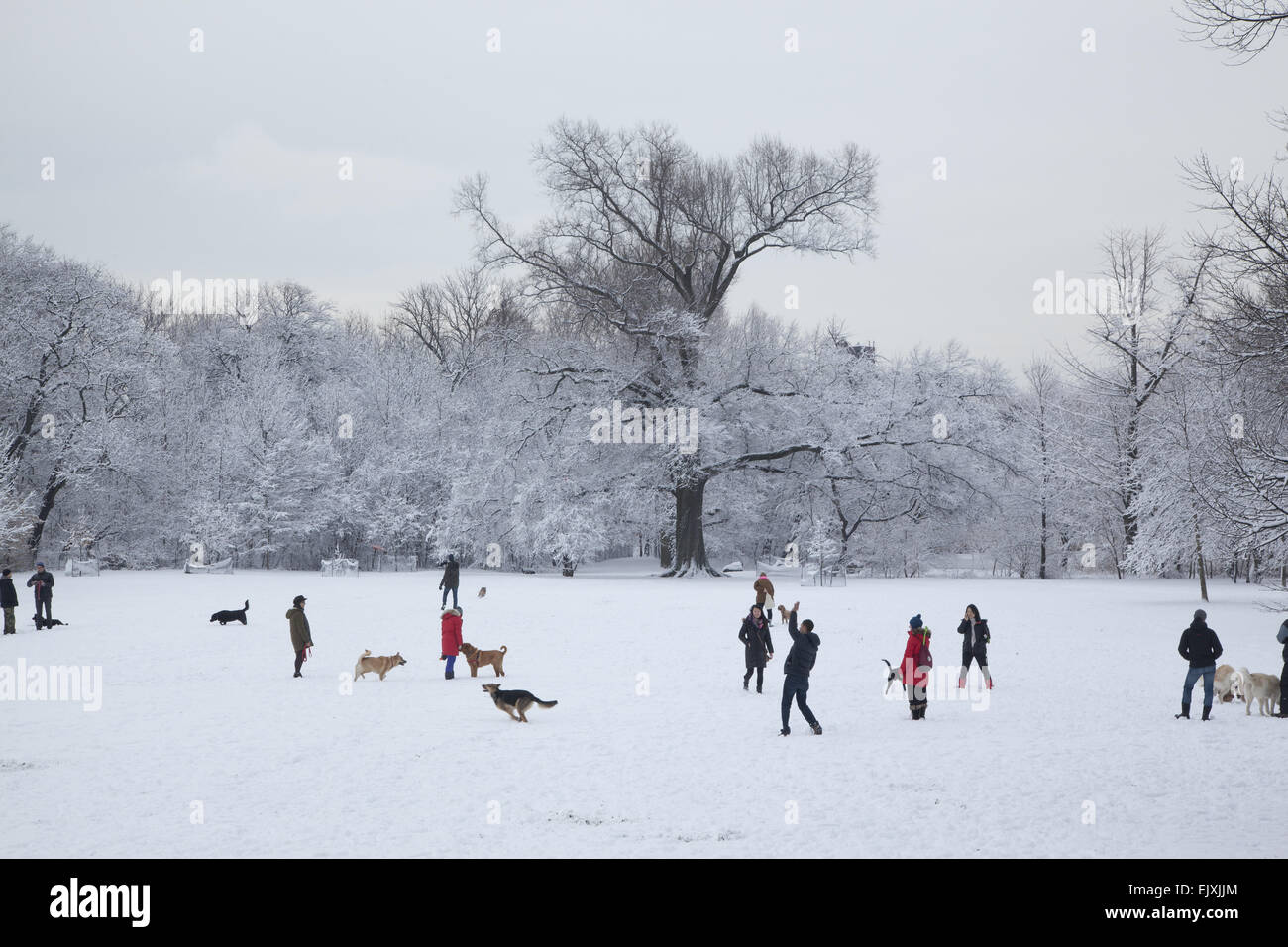 Winter morning in Prospect Park before 9 am when dogs are allowed to run free. Brooklyn, NY. Stock Photo