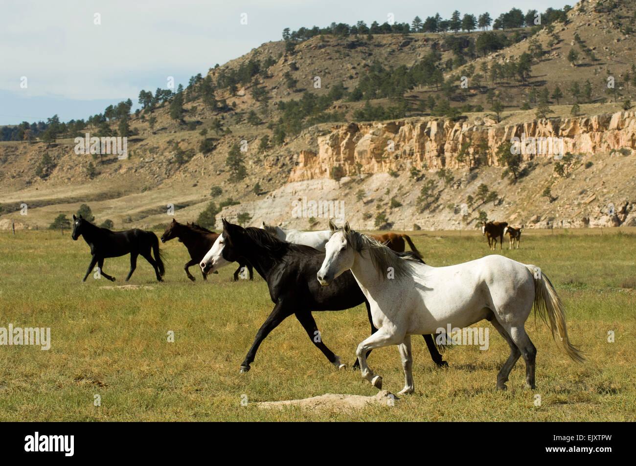 Black Hills Wild Horse Sanctuary Hot Springs South Dakota Usa Stock Photo Alamy
