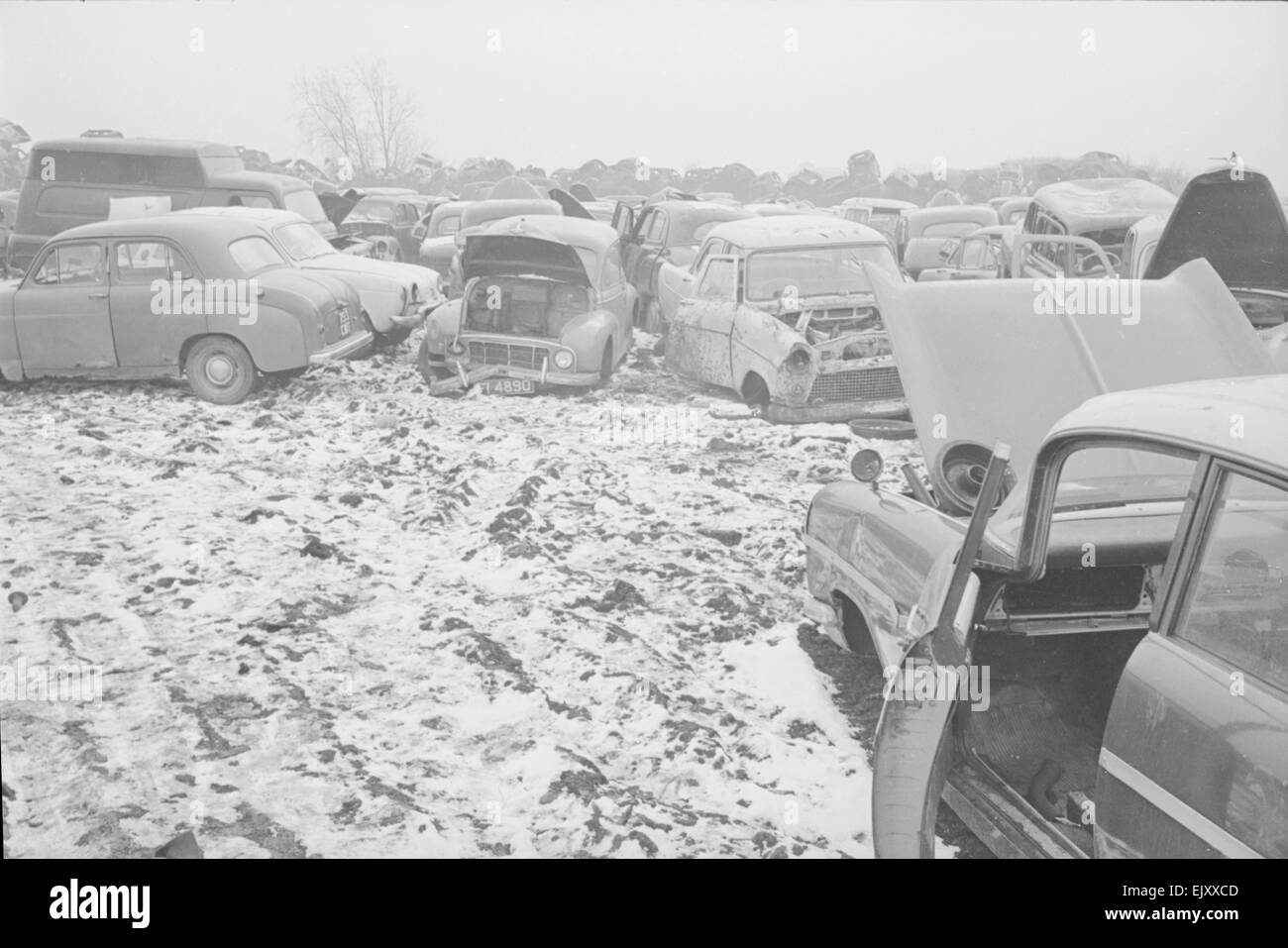 Some of the hundreds of scrap cars at the Jones Brothers junk yard near London. Circa 1964 - Stock Image