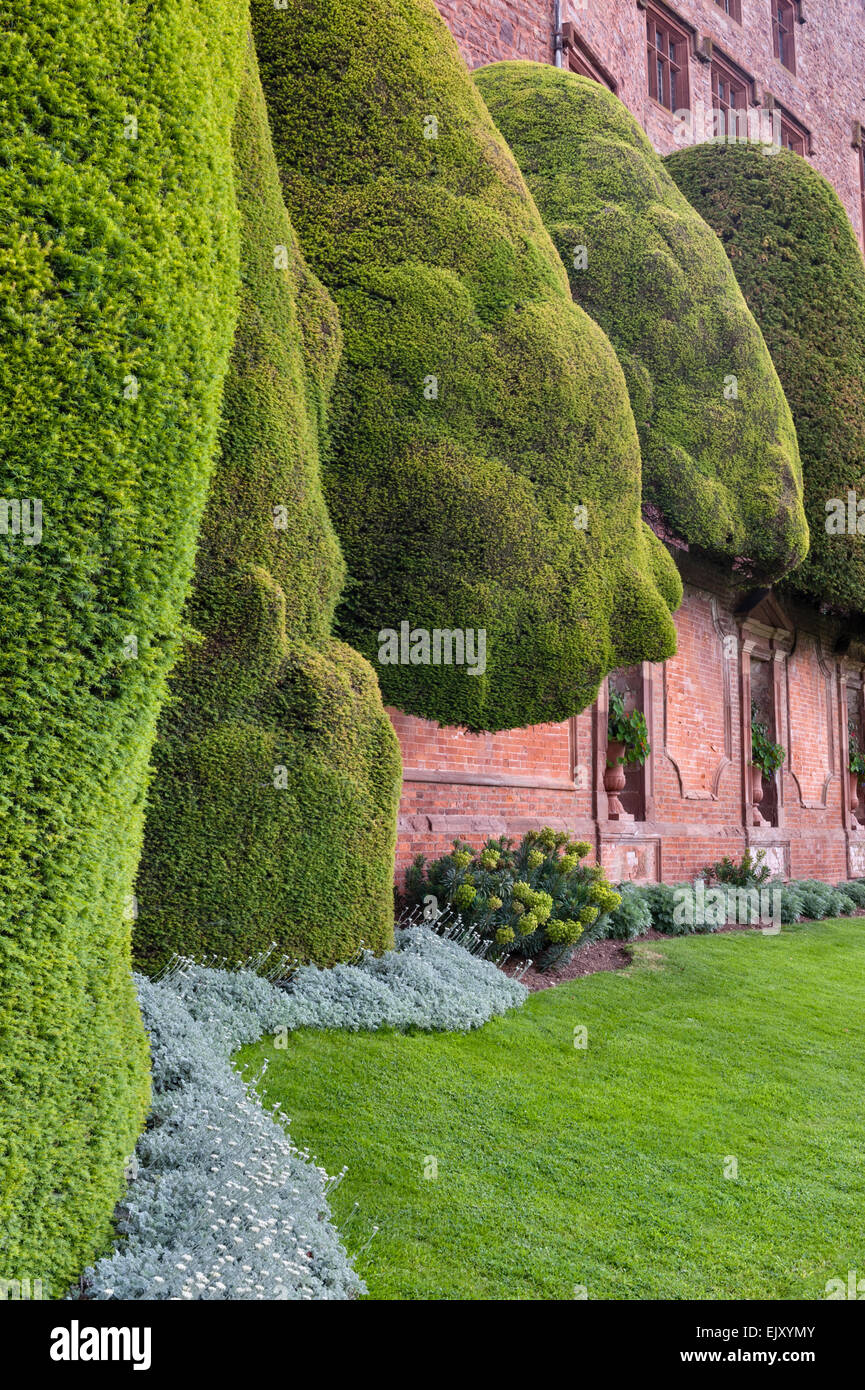 Powis Castle gardens, Welshpool, Wales, UK. This 17c Baroque garden is famous for its huge ancient topiary yew trees - Stock Image