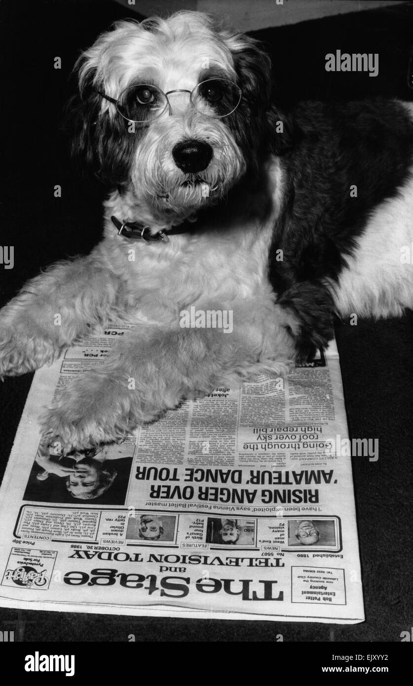 Shaggy Baggins, star of West End musical, 42nd Street, who was replaced by a poodle. 2nd November 1988. - Stock Image