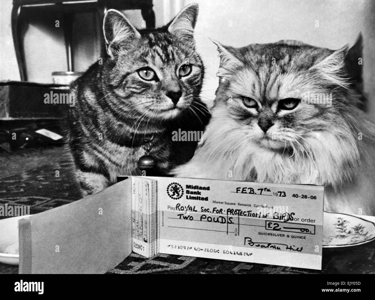 Animals: Cats. Quince (left) and Quicksilver ... settling the account. February 1973 P019776 - Stock Image