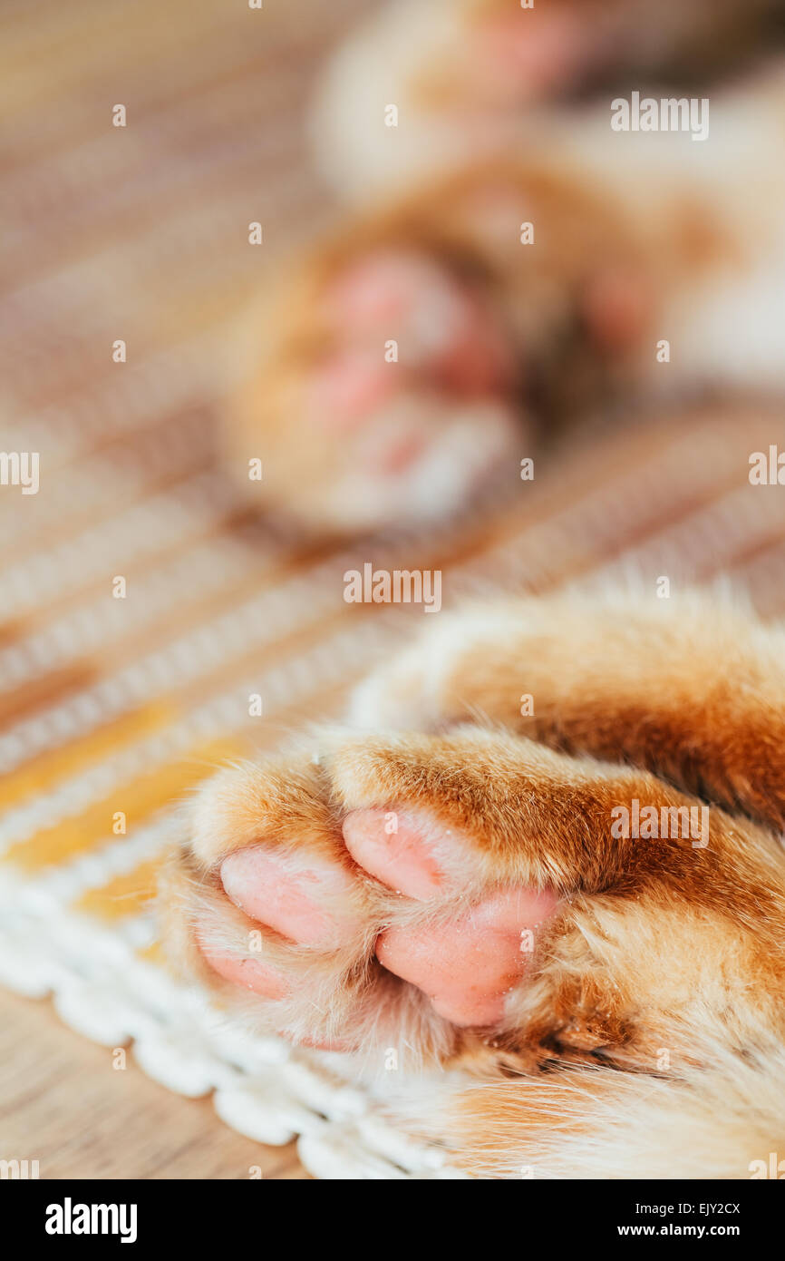 Cat Paw Close Up High Resolution Stock Photography And Images Alamy