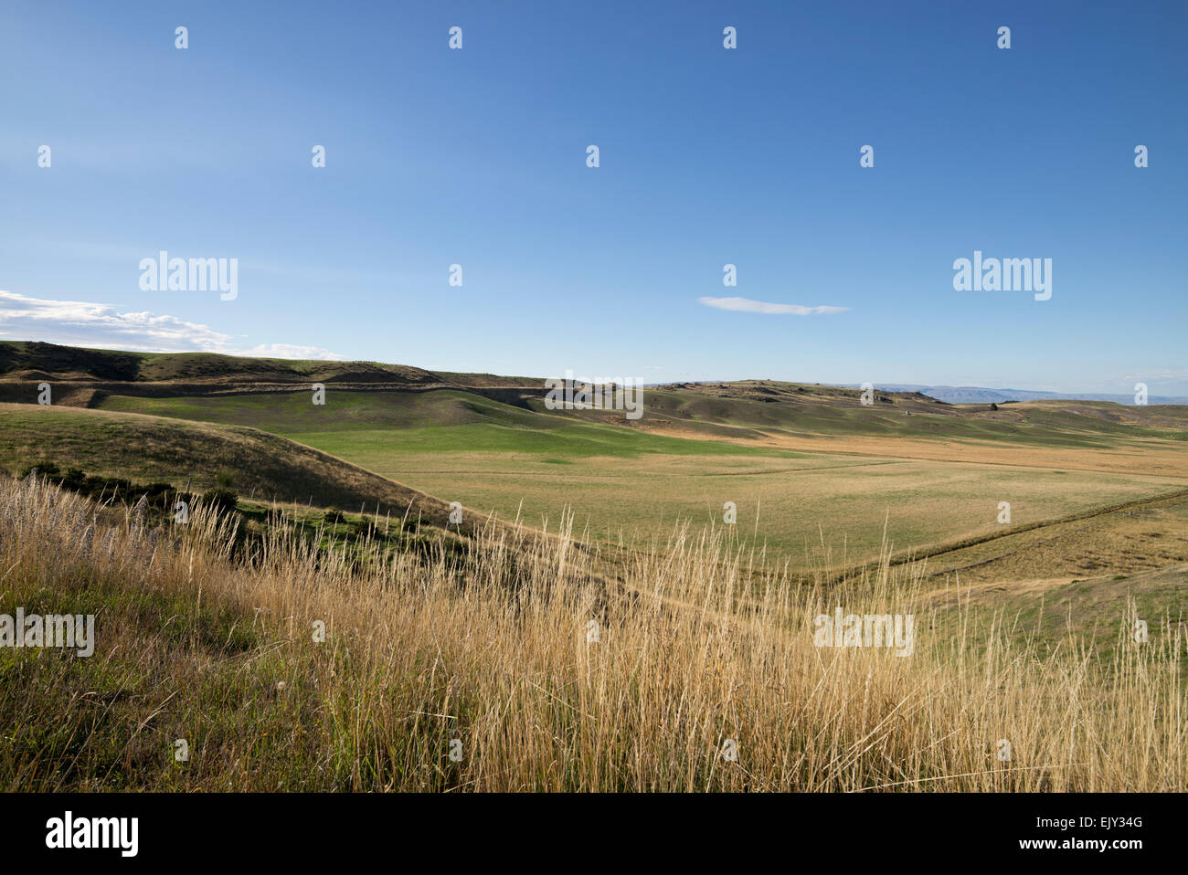 Maniototo Plains, Otago region, south island, New Zealand. - Stock Image