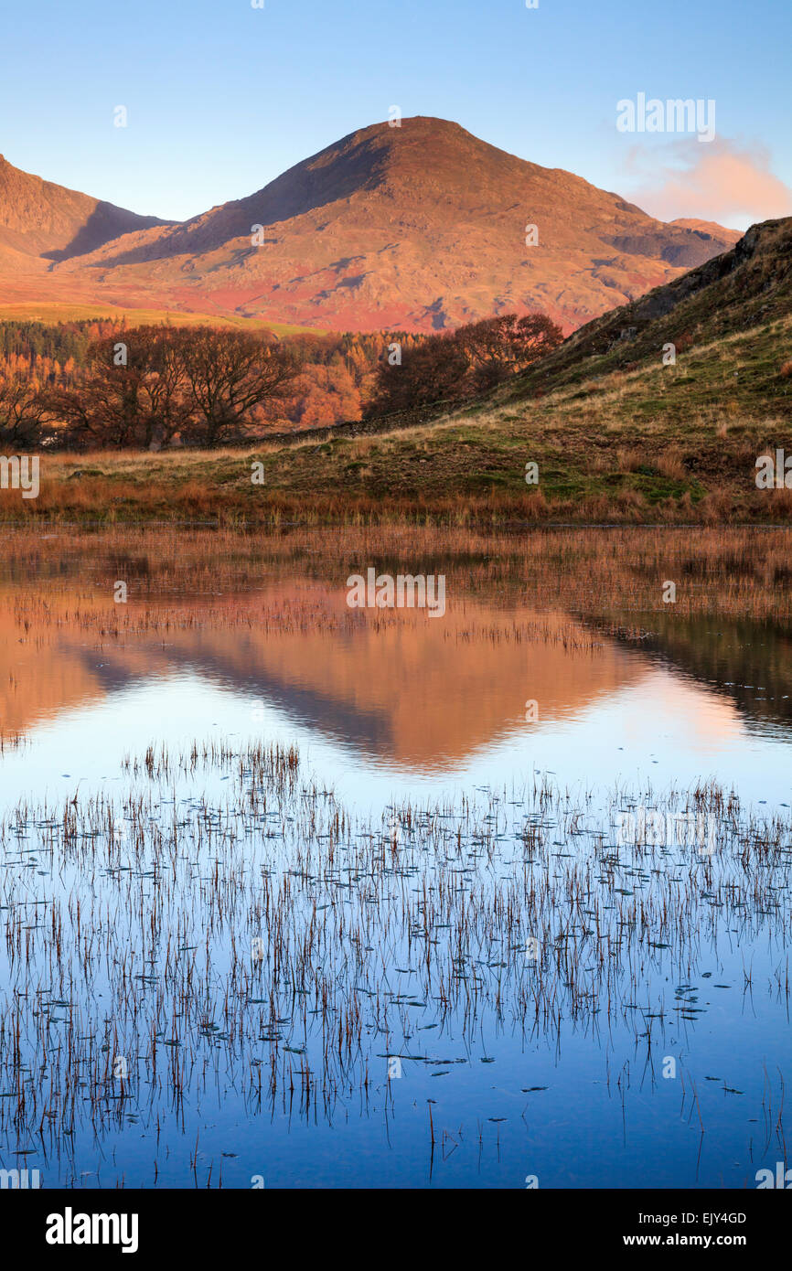 Kelly Hall Tarn near Torver in the Lake District National Park with the Old Man of Coniston in the distance. - Stock Image