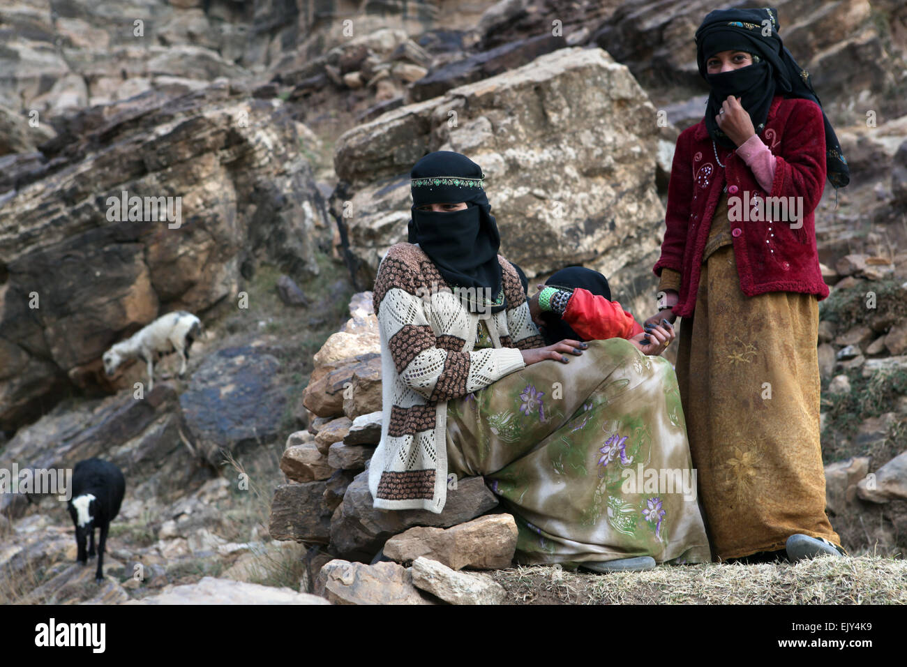 Teenage girls hearing goats in Kawkaban, Yemen. - Stock Image