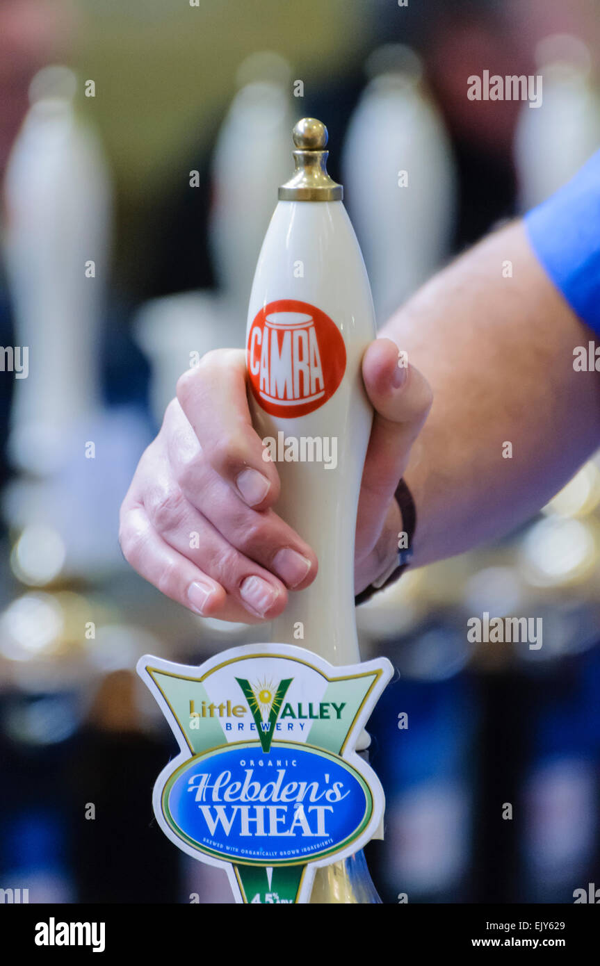 A man pulls a pint of Hebden's Wheat beer at a CAMRA real ale festival. - Stock Image