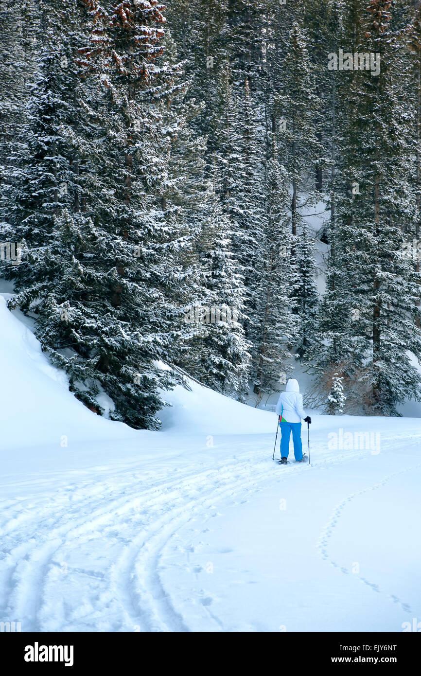 Snowshoer on Boreas Pass Trail, White River National Forest, near Breckenridge, Colorado USA - Stock Image