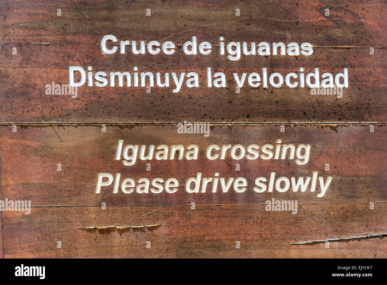 Closeup of an Iguana Crossing sign on Isabela Island in the Galapagos Islands in Ecuador - Stock Image