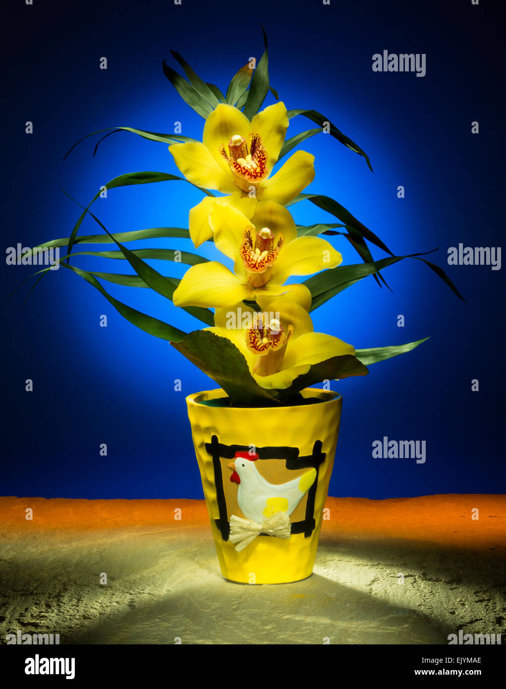 An Easter orchid - Studio still life image photographed using light painting techniques. - Stock Image
