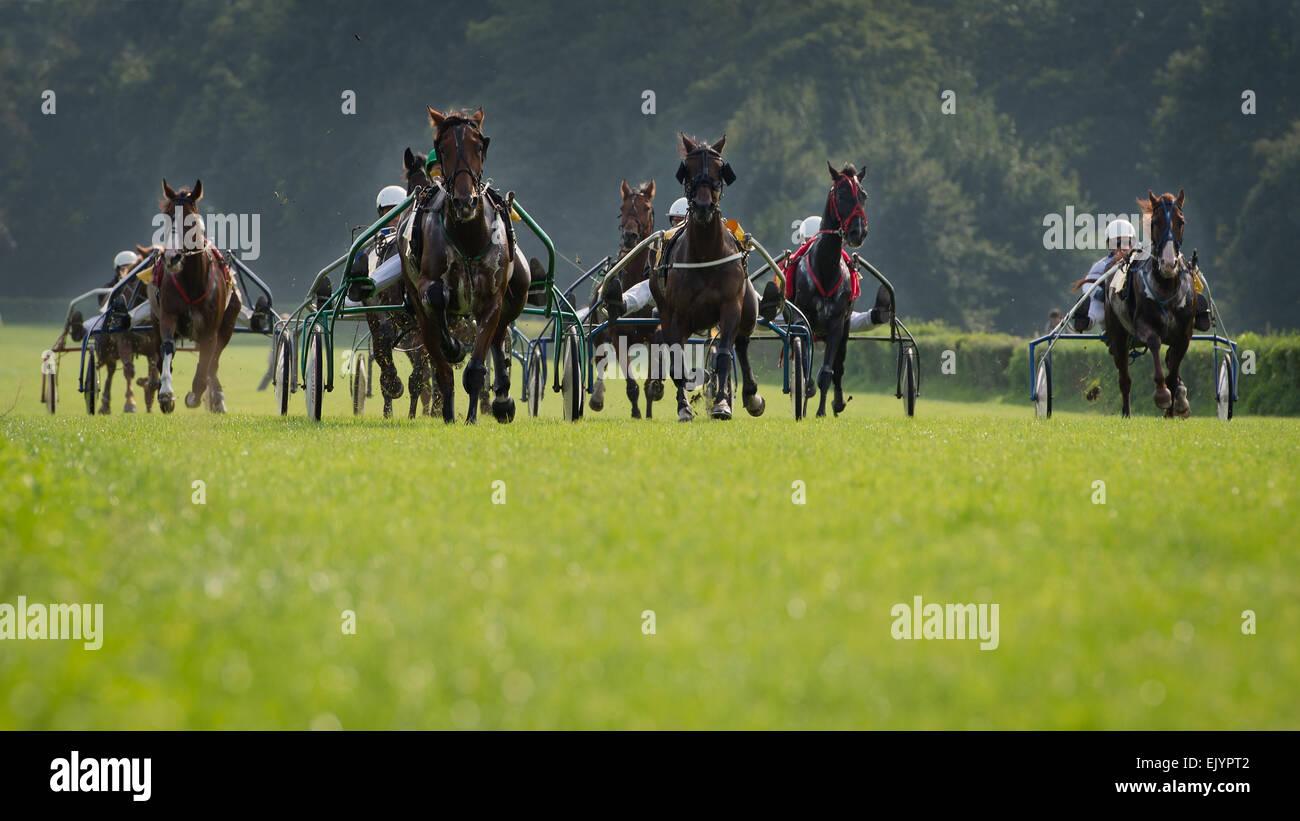 Horse trotting race - Stock Image