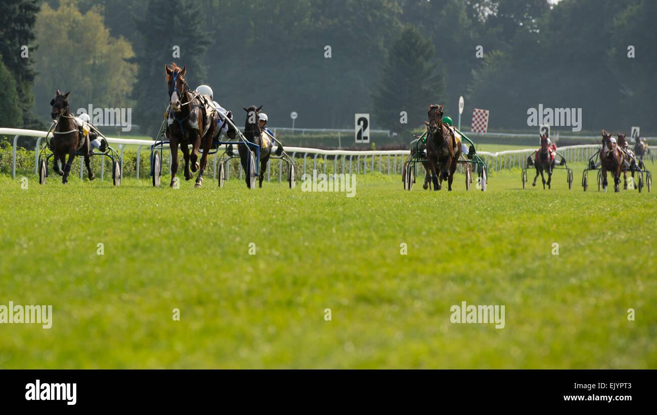 Trotting race - Stock Image