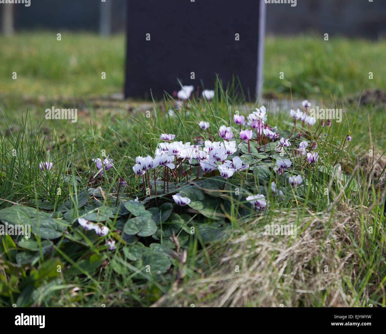 small flowers - Stock Image