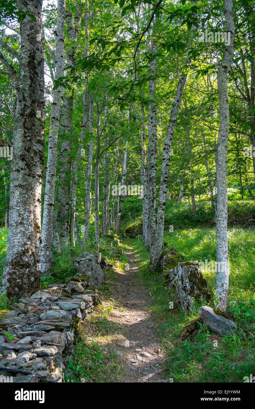 woodland path - Stock Image