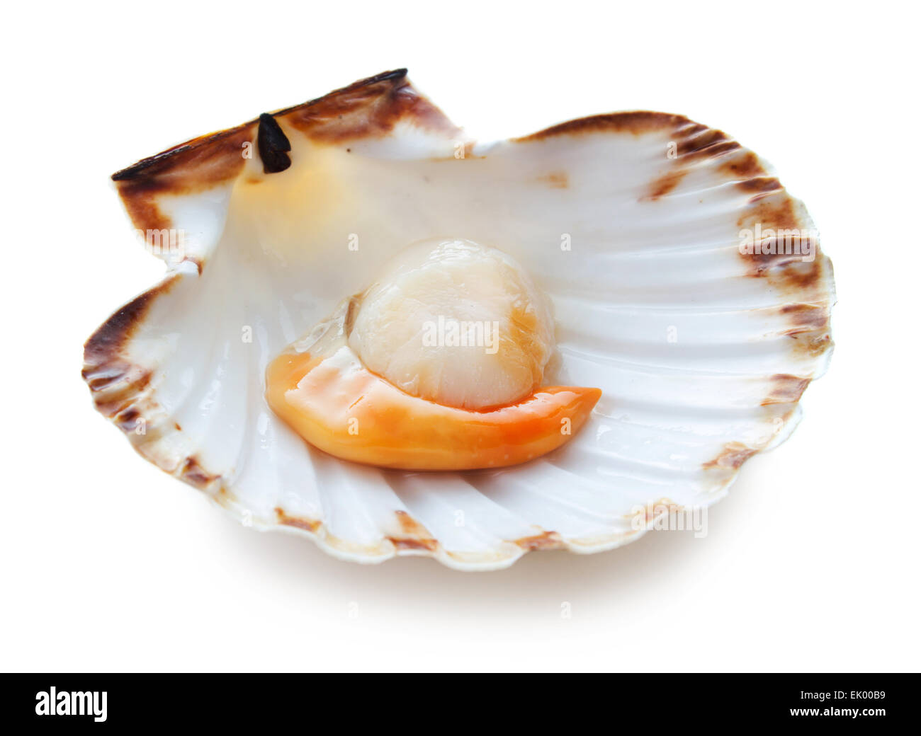 Raw Scallop Stock Photos & Raw Scallop Stock Images - Alamy