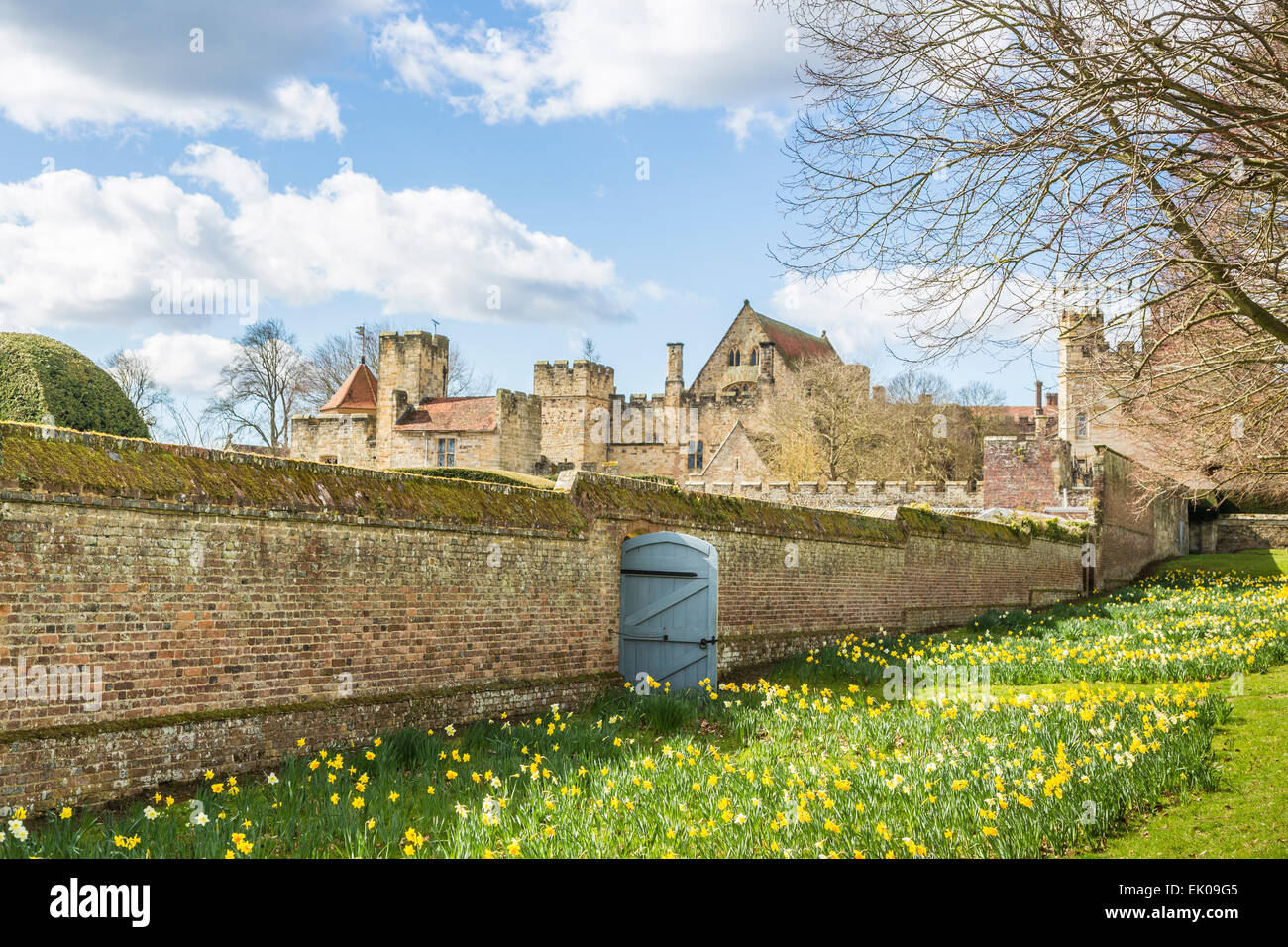 Daffodils in spring at Penshurst Place, a 14th century country house, the seat of the Sidney family, near Tonbridge, - Stock Image