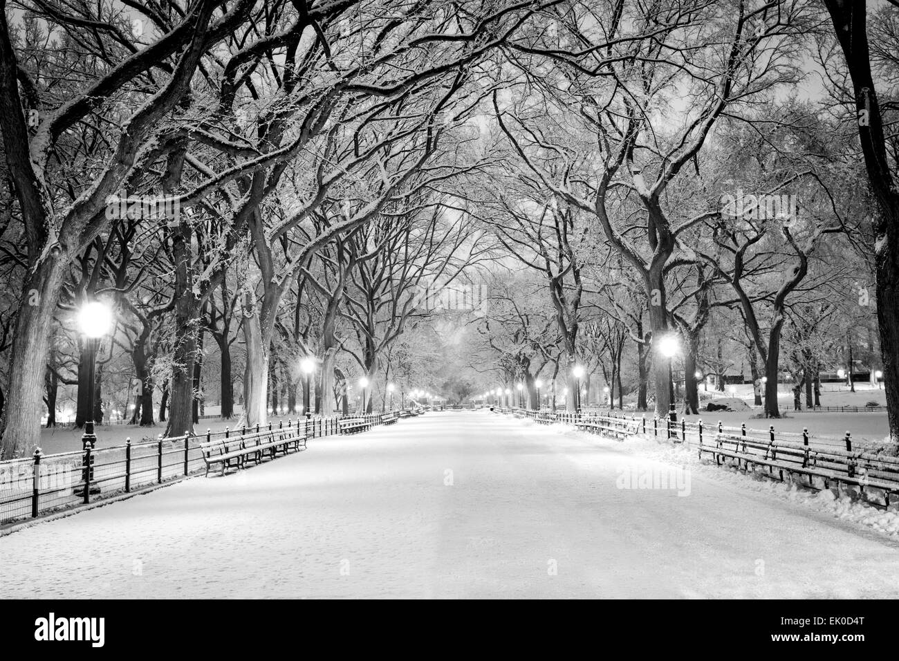 The Mall, Central Park, NYC, during a snow storm, early in the morning. Stock Photo