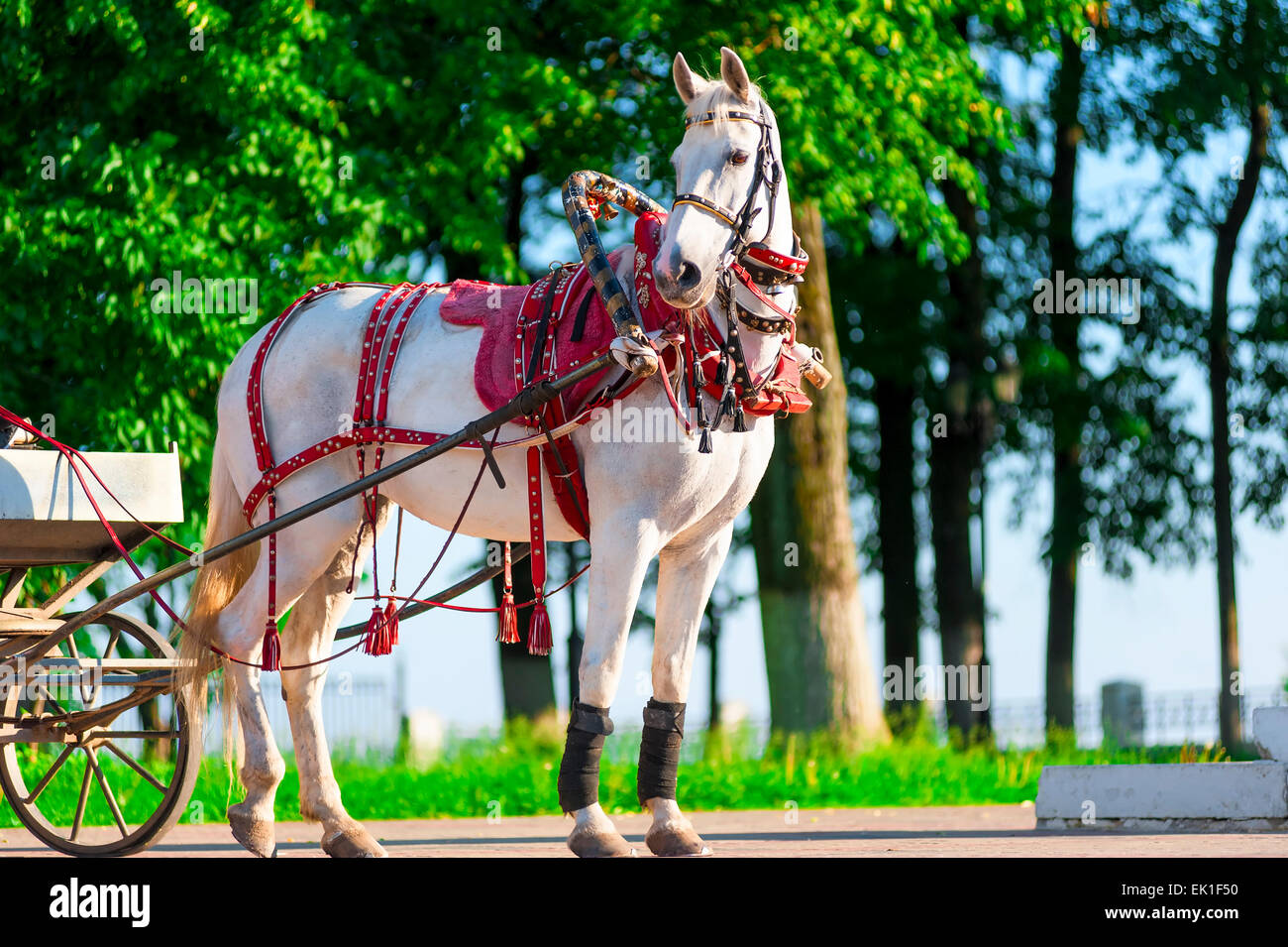white horse harnessed, stands on the sunny street - Stock Image