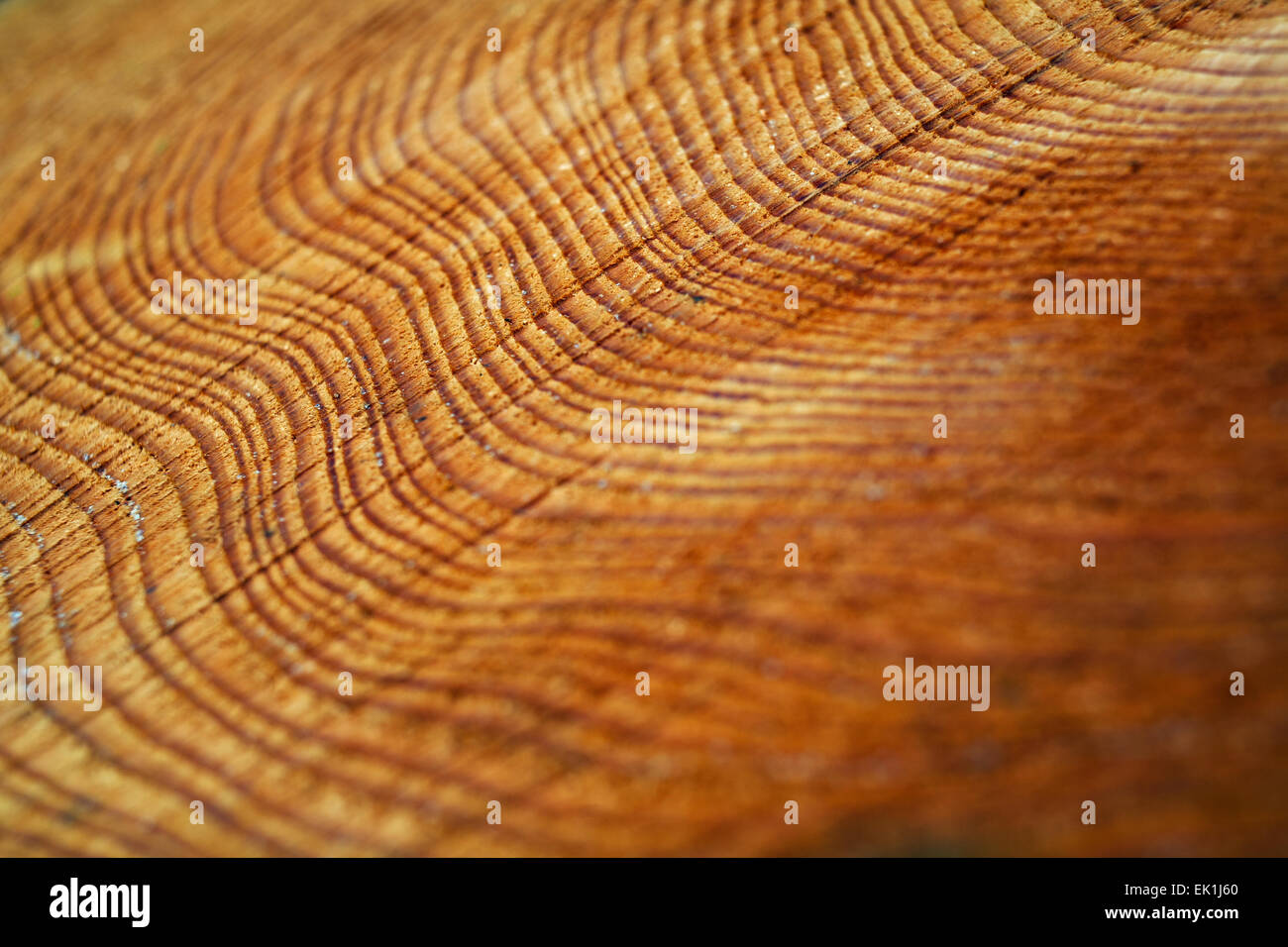 Growth rings from a felled pine tree. - Stock Image